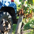 2012-Oct-Wine
