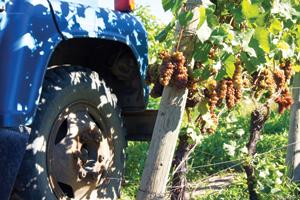 Kelowna Wine History