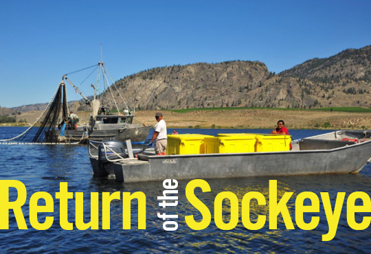Return of the Sockeye Feature