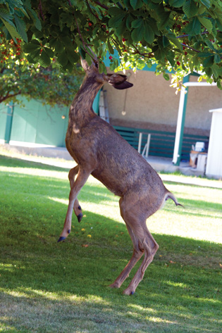 keep-deer-out-of-garden-tree