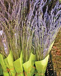 okanagan-wedding-favours-lavender