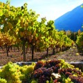 shuswap-wineries