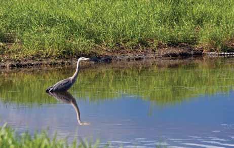 Getaways-Salmon-Arm-bay-heron