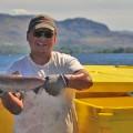 okanagan-kokanee-sockeye-salmon.