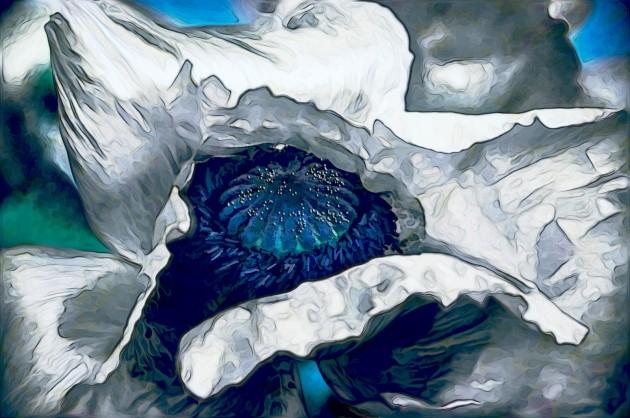 White-Poppy-Suzanne-Williams-Art-Exhibit