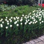 Friendship garden in bloom in Kelowna