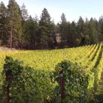 Scorched Earth Winery: rising from the ashes