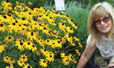 Centennial blossoms at Summerland Gardens