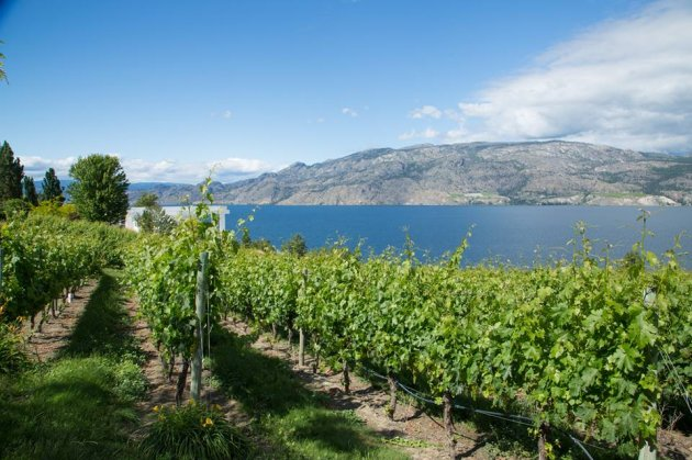 evolve-winery-summerland