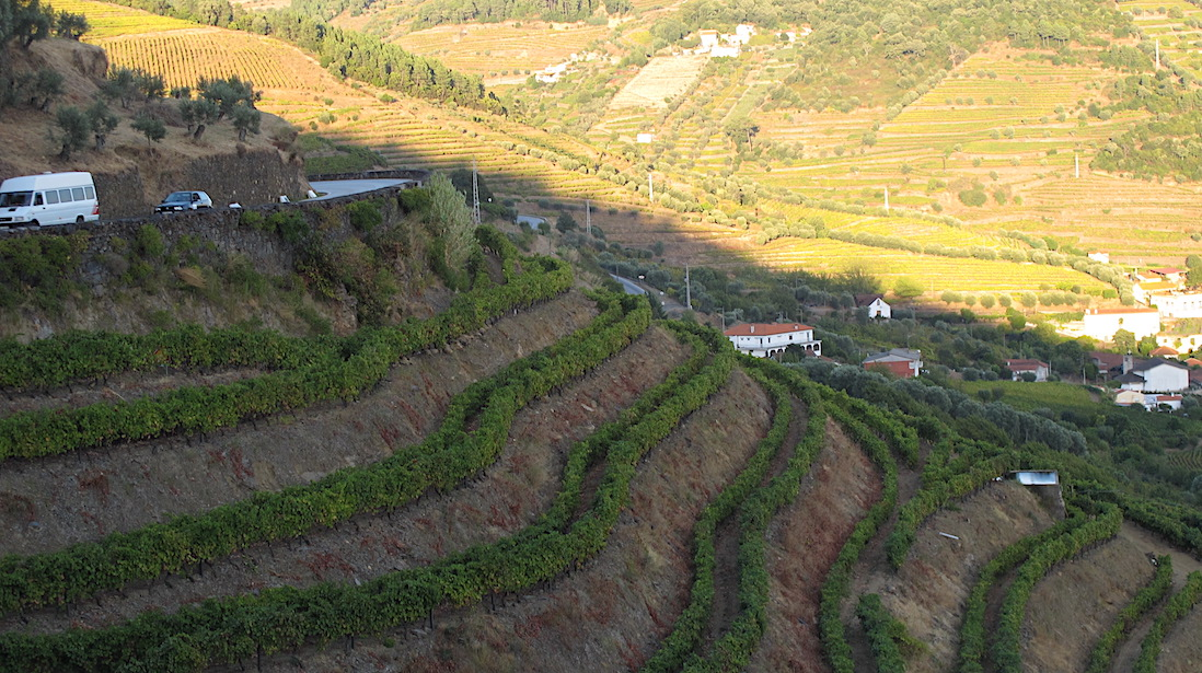 portugal-vineyards