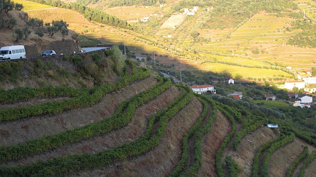portugal-vineyards