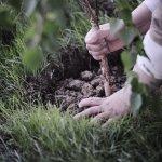 Indigenous garden takes root at Kelowna campus