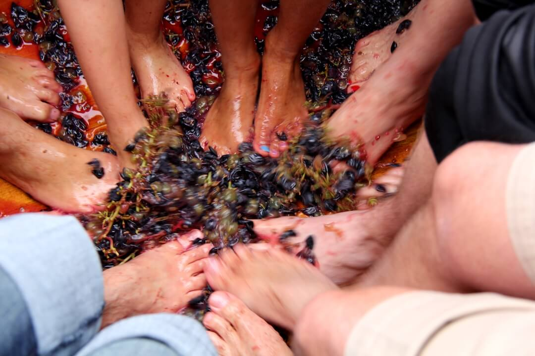 house-of-rose-winery-grape-stomp