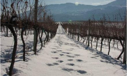 Be merry with a winter weekend in wine country