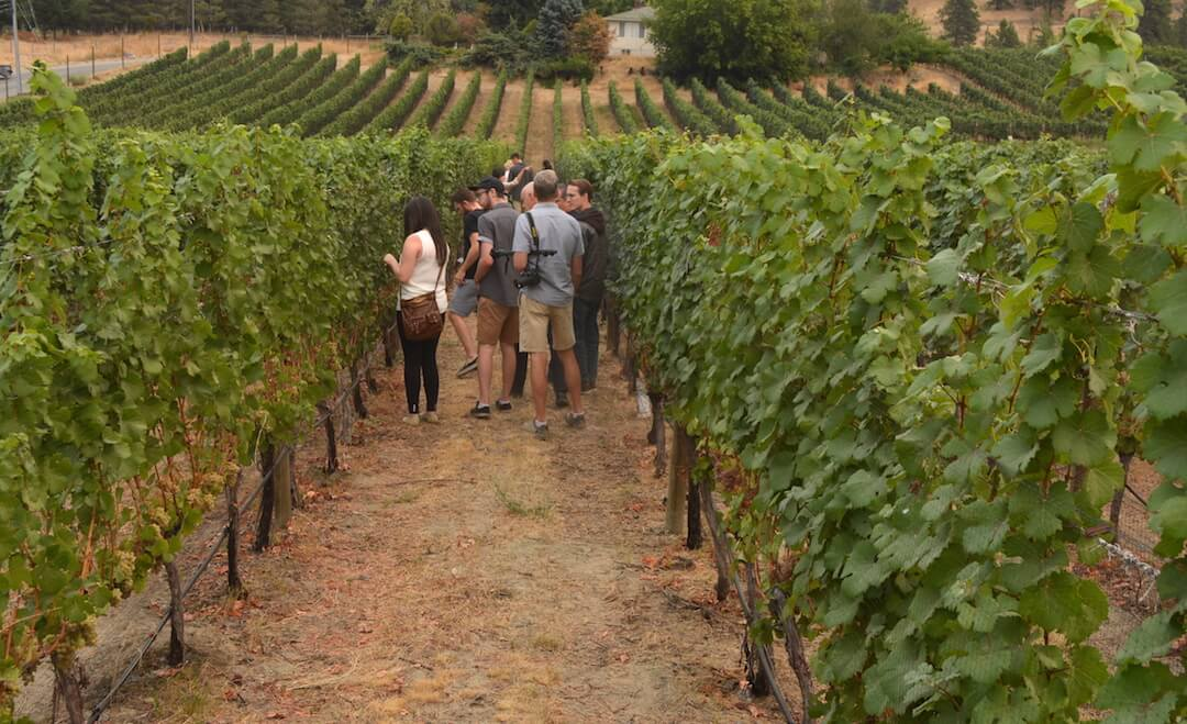 New year brings new part-time viticulture courses to Okanagan
