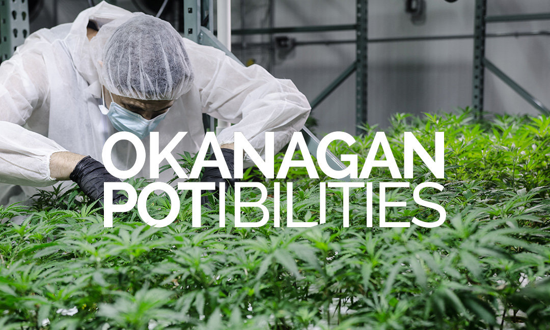 Feature: Okanagan POTibilities